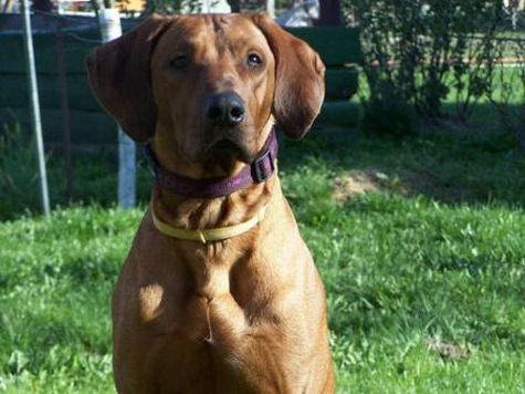 Собака покалечила 10-летнего школьника в Москве