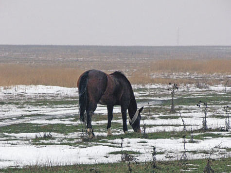 Чем грозит собственникам земельных наделов развитие Новой Москвы?