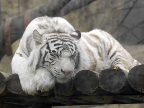 Животным в зоопарке удлинили рабочий день