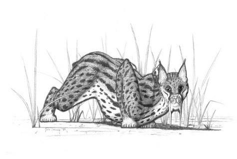 Самые сильные лапы были у саблезубых котов