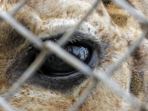 В зоопарке свято место не будет пусто