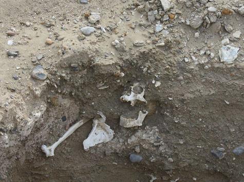 Древними черепами египетские подростки играли в футбол