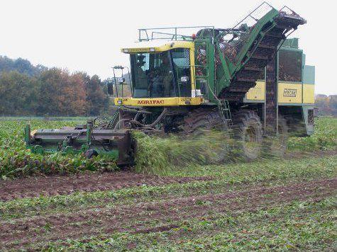 Обнаружен уникальный способ повышения урожайности сельхозкультур