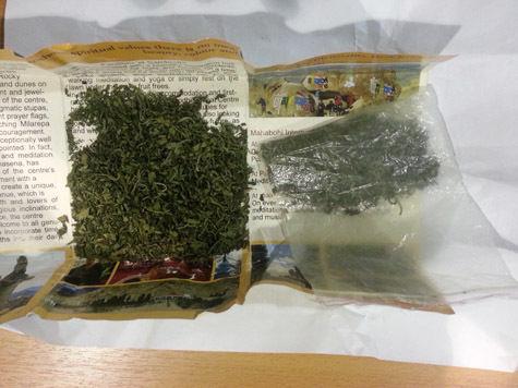 Туристка собрала  из наркотиков целый гербарий