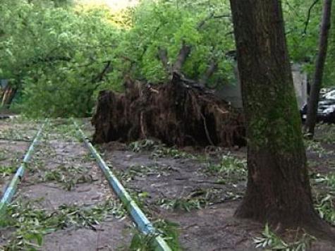 Старые деревья свалили на покойников