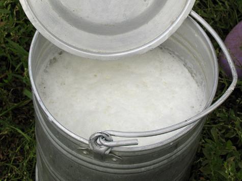 Молоко поможет защитить от ожирения даже обжор