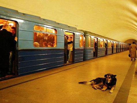 Собака парализовала линию метро