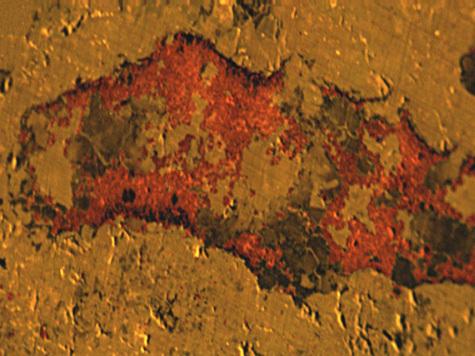 Найдены останки первых животных Земли