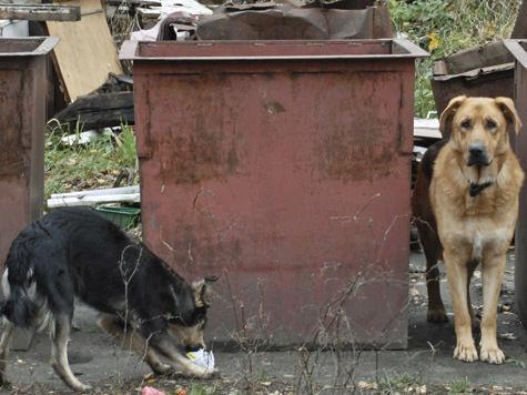 Количество бродячих собак в Москве может увеличиться