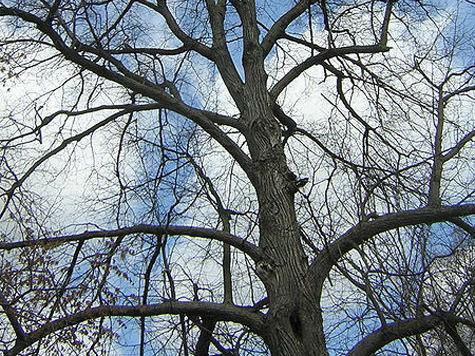 В Ильинском жители отстояли старую липовую аллею