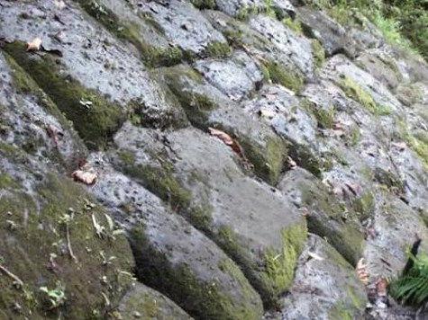 В джунглях Эквадора найден
