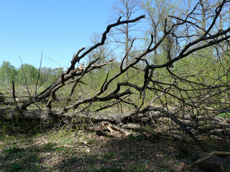 Охота на защитников Химкинского леса открыта
