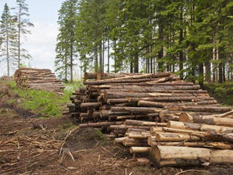 Министр природы и экологии заявил, что бороться с этим поможет новая госпрограмма