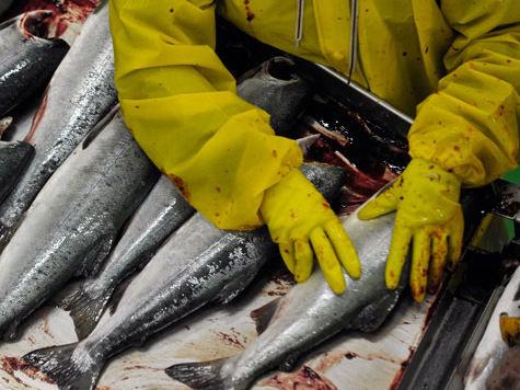 Рыбный день экспортера