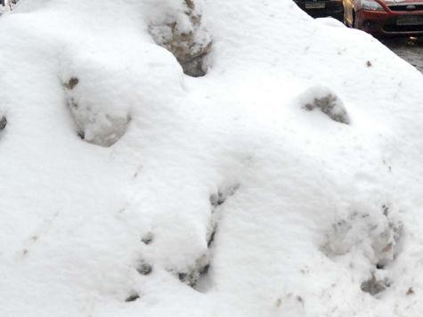 Ученые не видят в декабрьских морозах ничего необычного