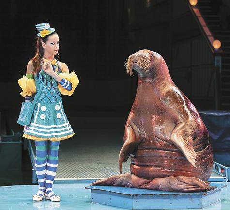 С моржами жить — в свисток свистеть