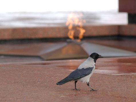 В Тамбовской области вандал осквернил Вечный огонь матом