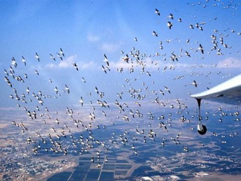 Самолеты будущего будут находиться в воздухе неограниченно долго