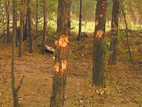 Наркоторговцы атаковали поселок в Свердловской области