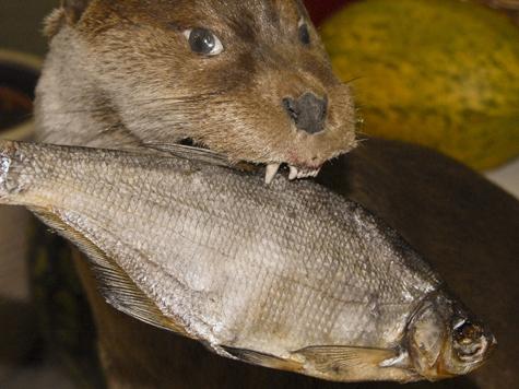 В ресторане Собчак мутит воду тухлая рыба