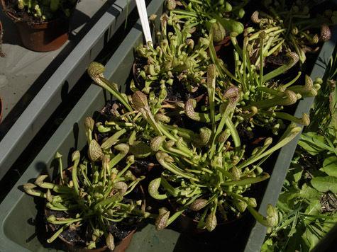 Новое удобрение сделает растения неуязвимыми для сильной жары
