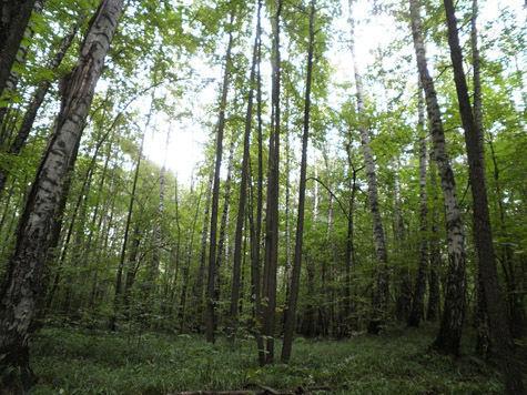 Дорога через Битцевский лес превратилась в место казни ужей и ежей