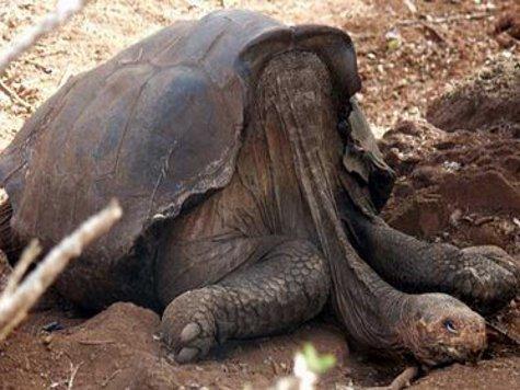 На Галапагосских островах умерла последняя гигантская черепаха