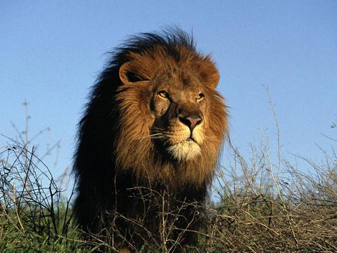 Власти заставили льва ужиться с орлом на гербе