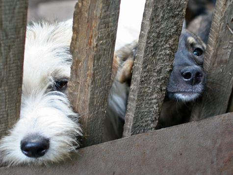 Уличные псы чувствуют себя неприютно