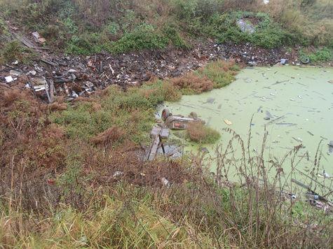 На дне пруда нашли останки четырех человек, пропавших 9 лет назад