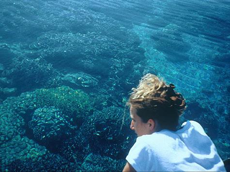 Людям с поврежденными костями будут вживлять морские кораллы?