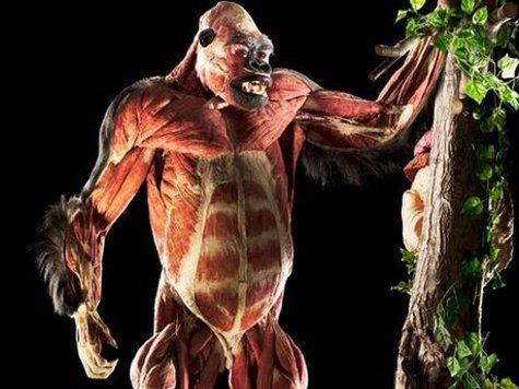 Лондонский Музей истории показал животных без кожи. ФОТО