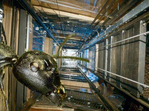 Бороться с муравьями и устанавливать особый график работы лифтов перестанут власти столицы