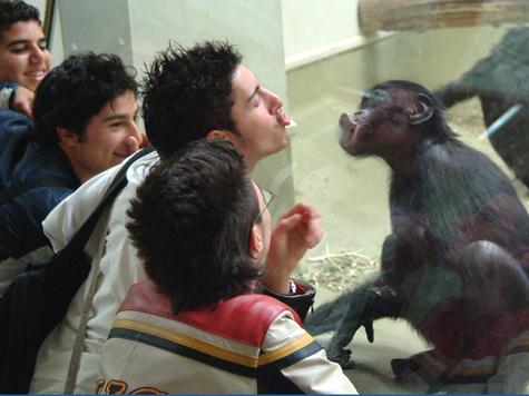 """""""МК"""" выяснил, как животные  в зоопарке изучают посетителей"""