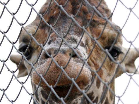 В зоопарке пожертвовали выходным ради школьников