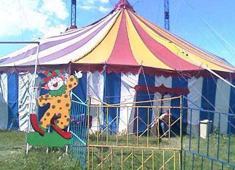 Шестилетняя артистка цирка стала жертвой агрессивного хищника за кулисами шапито в подмосковном Клину днем в воскресенье