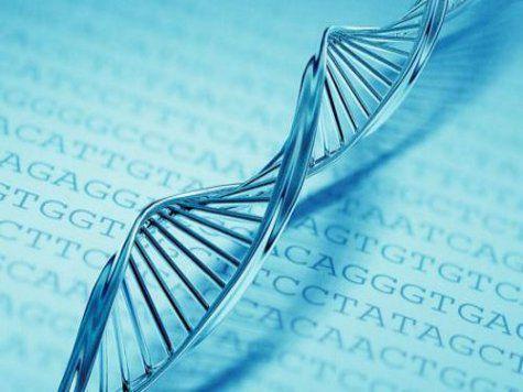 Найден ген, который заставляет ткани восстанавливаться, как в юности