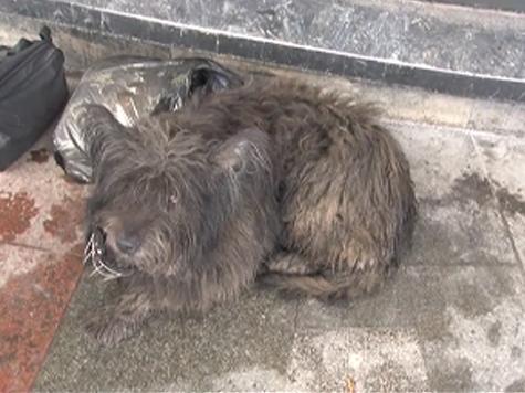Чиновников заставят пристальнее вглядываться в безнадзорных собак
