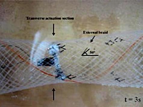 Инженеры изучают биороботов способных менять форму