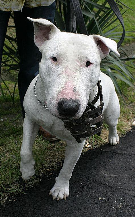 В проекте закона о кошках и собаках установлены правила выгула животных опасных пород