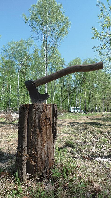 Председатель Комлесхоза Московской области Евгений Трунов: «Всех, кто позарится на леса, ждет такая участь»