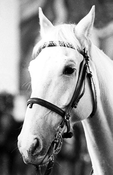 В столкновении восьми машин погибла лошадь