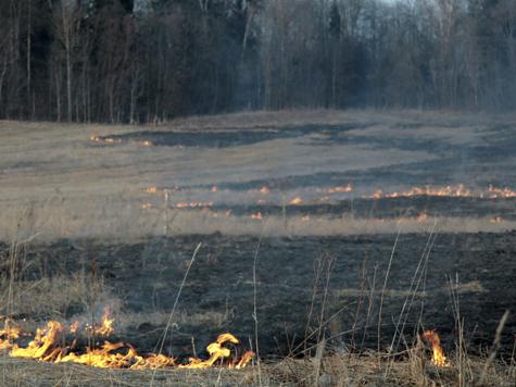 Забытый способ борьбы с лесными пожарами получит в Подмосковье вторую жизнь