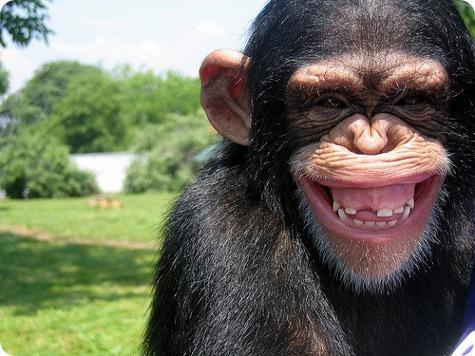 В Америке запрещены опыты над обезьянами