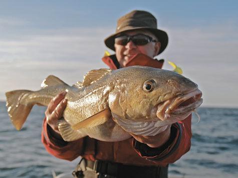 Треть всей рыбы в России оказалась фальшивой