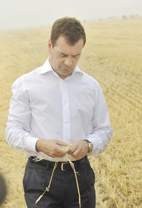 Медведев против «картошки»