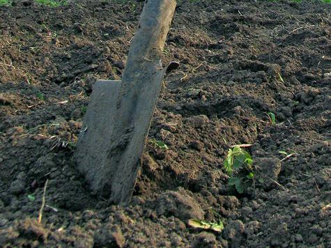 В «Сказку» — с метлой и лопатой