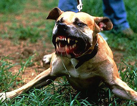 Кому и зачем понадобилось разделить собак на безопасных и опасных
