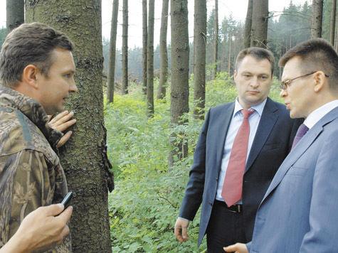 В Подмосковье вырубят 100 000 гектаров леса