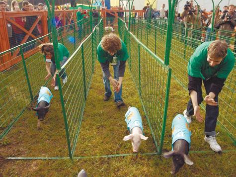 Свиней зарезали на бегу